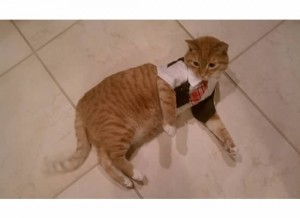 Wilbur doesn't mind getting dressed up once in a while.