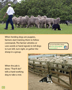 http://aws.cricketmedia.com/media/20160318192516/Sheep-Dogs-on-the-Job.pdf