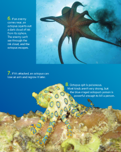 OCTOPUS: HOW SMART COULD IT BE?