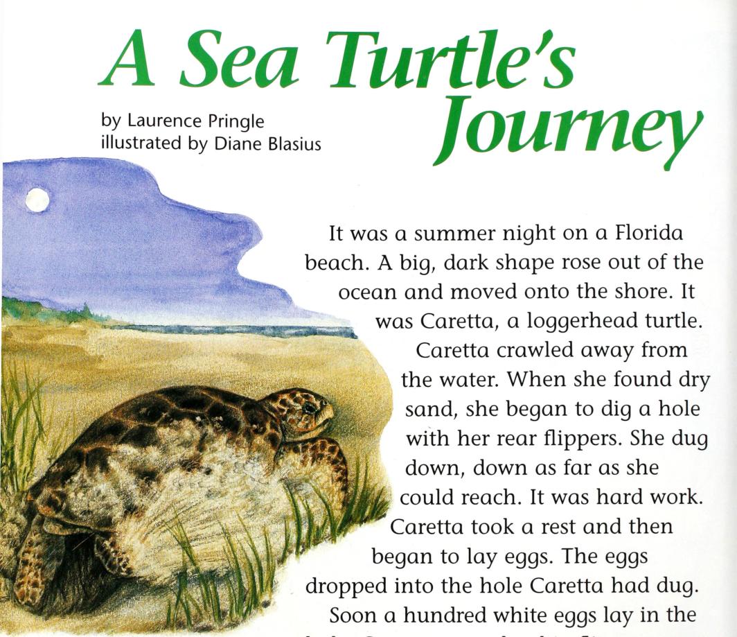 A Sea Turtle's Journey - Cricket Media Inc