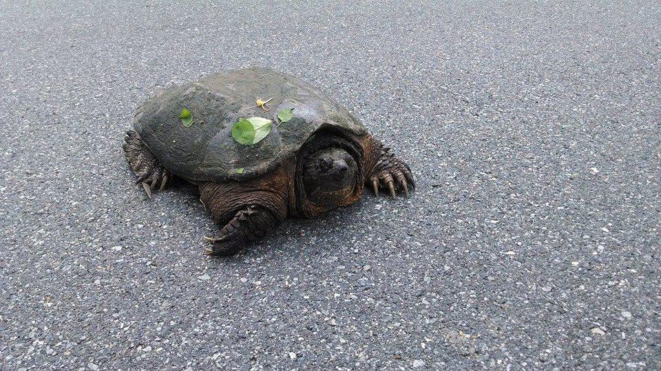 Nature: Cranky Turtle