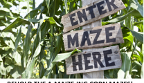 BEHOLD THE A-MAIZE-ING CORN MAZES!