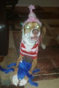 It's Gracie's birthday! She's 11!