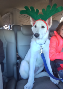 Trooper was ready to pull Santa's sleigh.