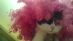 May-May was not thrilled with her pink wig!