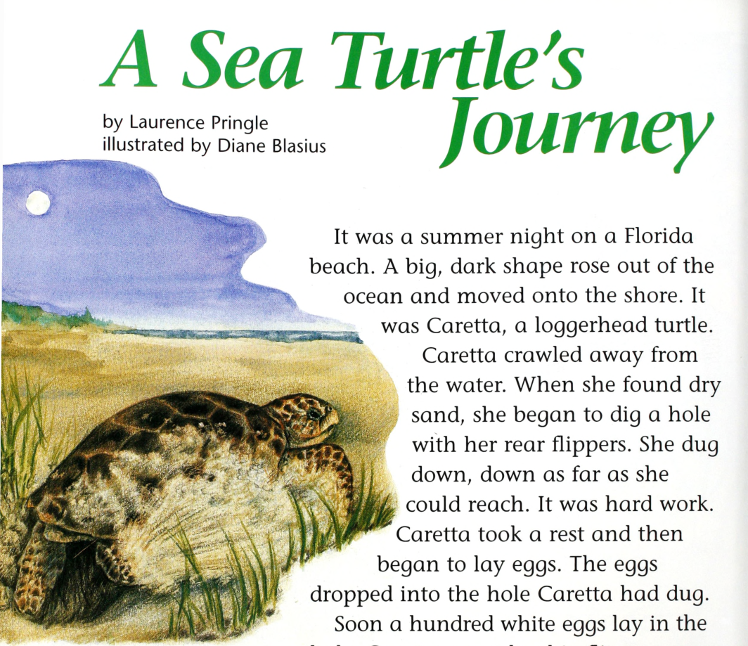 A Sea Turtle's Journey - Cricket Media Inc
