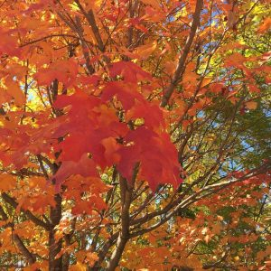 Fall Leaves Activity
