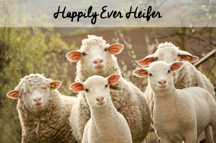 Happily Ever Heifer
